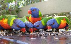 Because you share your veranda with these guys…