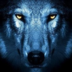 Wolf Images, Wolf Photos, Wolf Pictures, Anime Wolf, Beautiful Wolves, Animals Beautiful, Wolf Craft, Animals And Pets, Cute Animals
