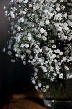 Charleston Gardens Language Of Flowers