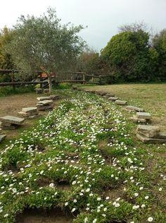 I 99 Olivi's daisy lane
