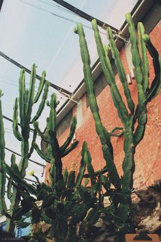 louisetannerphotography:  cacti  Taller than the sky.