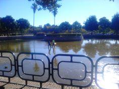Cleaning the pond - Limpiando el estanque