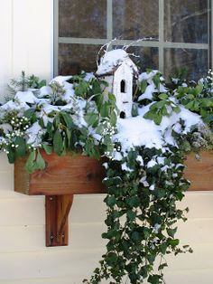 Winter Window Box Ideas | Ideas in Bloom: The Holidays are Fast Approaching