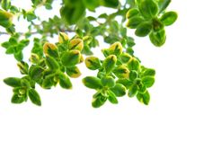 Tymián nevyžaduje žádnou velkou péči   Naše zahrada Thyme Essential Oil, Natural Essential Oils, Natural Treatments, Natural Cures, Natural Beauty, Canning Pressure Cooker, Pressure Cooking, Thyme Tea, Herbs List