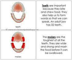 Montessori dental unit