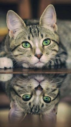 .Pretty cat with green eyes.
