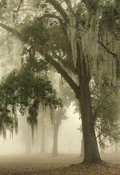 This is very mystical to me.....Spanish Moss, New Orleans, Louisiana photo via amanda