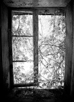 valscrapbook:  a window by panigor on Flickr.