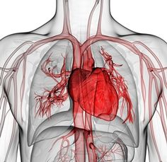 Combining L-Carnitine & CoQ10 Not Only Gives You Energy—It Protects Your Heart