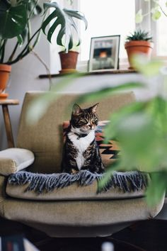 Cats and Plants, the Bohemian life.
