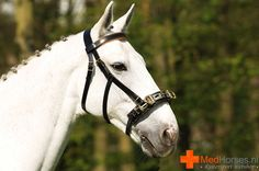 Norton Brede Kaptoom Beautiful Horses, Animals, Pretty Horses, Animales, Animaux, Animal, Animais