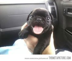But actually. When I have a home and stability, I will be getting a pug.