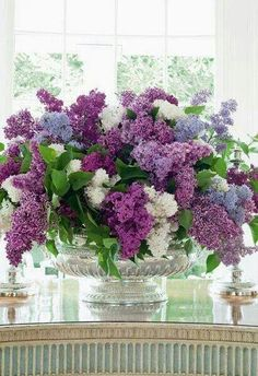 Lilacs for spring.