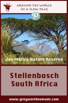 Spring knocks at the door of South Africa in the beautiful wine region of Stellenbosch, Western Cape.
