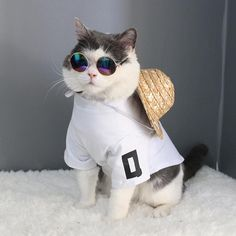 Colorful Sunglasses for Cats. Summer discount at printeera.com #shopping #cat #cats #kittens #lovecat #catlover