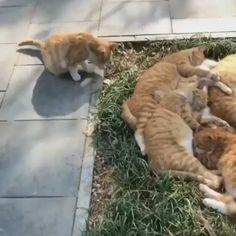 Save me a spot! #cats