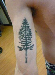 doug fir tattoo - Google Search