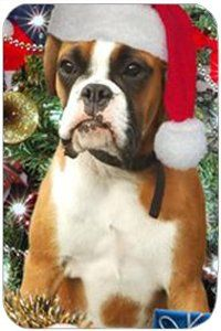 "Boxer Large Christmas Tempered Cutting Board by Doggie of the Day. $39.99. 15.74"" x 11.8"" x 5/32"". Please Allow 4 Days to Ship. Dishwasher Safe. Tempered and Durable. Spice up your kitchen with a Boxer cutting board! These cutting boards are perfect for home chef's and restaurant owner's alike. This is a specially coated glass cutting board that is durable and dishwasher-safe."
