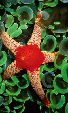 .~Necklace Sea Star~.