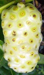 The Noni fruit - There is  a lot of scientific evidence about the anticancer activities of individual nutrients that are known in Noni.