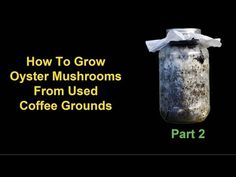 How To Grow Oyster Mushrooms From Used Coffee Grounds - Part 2: Identifying Contamination - YouTube