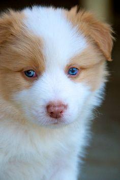 Puppy - by Renee Hubbard