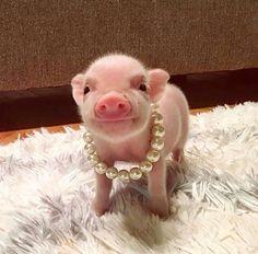 A little bit of cuteness ThreeTn Super Cute Animals, Cute Little Animals, Cute Funny Animals, Cute Dogs, Little Pigs, Cute Baby Pigs, Cute Piglets, Baby Piglets, Teacup Pigs