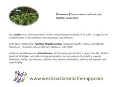 Subtle uses of Cinnamon EO West Coast Aromatherapy