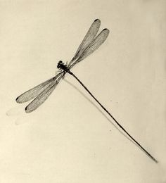 Dragonfly tattoo. Japanese artist unknown