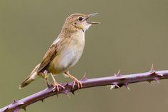 #FOTOGRAFIA #LIBRO #AVES #CROWDFUNDING - El Atlas de Aves Nidificantes de Asturies es el resultado de un trabajo de 20 años (1990/2010). Recoge la información sobre todas las aves nidificantes en la provincia. Incluye más de 2000 fotografías y dibujos en color y varios capítulos generales sobre la avifauna de toda la geografía asturiana.  pájaro bird rama branch +info http://www.coa.org.es/ Crowdfunding verkami http://www.verkami.com/projects/8289-atlas-de-aves-nidificantes-de-asturies