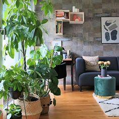 Ana ▪️ (@homedesignbyana) • Instagram-Fotos und -Videos Good Day, Cosy, Greenery, Urban, Videos, Plants, Instagram, Advertising, Buen Dia