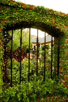 Living Fences Design Ideas, Pictures, Remodel, and Decor - page 9