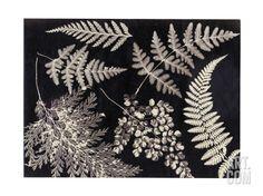 Leaf Wall Art, Pressed Flower Art, Botanical Art, Black And White Photography, Find Art, Framed Artwork, Giclee Print, Ferns, Prints
