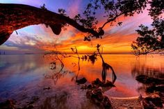 Mangroves at Sunset - Key Largo, Florida, by Daniel L. The ubiquitous Florida mangrove trees that grow along the shallow coastlines provide an interesting foreground for this beautiful sunset in Key Largo. Florida Keys, Key Largo Florida, Florida Usa, Florida Everglades, Fl Keys, West Florida, Beautiful Sunset, Beautiful World, Beautiful Places