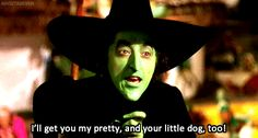 Check out all the awesome wizard of oz gifs on WiffleGif. Including all the wicked witch of the west gifs, glinda gifs, and margaret hamilton gifs. Wizard Of Oz Memes, Wizard Of Oz Characters, Wizard Of Oz 1939, Character Tropes, Margaret Hamilton, Broadway, Not My Circus, Epic Film, Under Your Spell