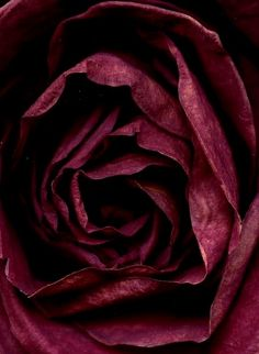 Burgandy~Love of Color Shades Of Burgundy, Burgundy Wine, Burgundy Color, Red Wine, Maroon Color, Magenta, Burgundy Aesthetic, Aesthetic Colors, Aesthetic Collage