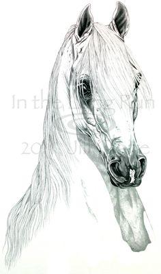 Arabian Horse Art Painting Print Jill Claire by JillClaireArt