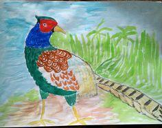 Японский  зеленый  фазан
