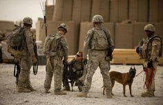 アフガニスタンで爆弾探知犬とともに偵察行動の準備をする米軍兵士。米軍はゲリラが仕掛ける簡易爆弾(IED)で大きな被害を出しているが、IEDの発見にはエレクトロニクスを駆使した探知装置よりも、犬の嗅覚の方がはるかに効果があるとされる(2010年07月28日) 【AFP=時事】