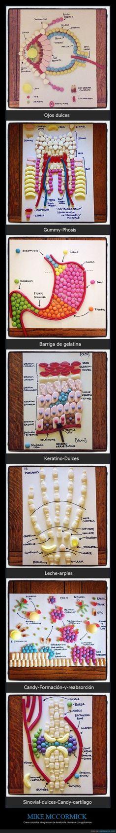 Anatomía con chuches