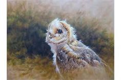 Young Juvenile Barn Owl by Bird of Prey Artist Alan M Hunt Image result for alan m hunt Yeti Stickers, British Wildlife, Cute Mugs, Birds Of Prey, Laptop Decal, Go Outside, Great Photos, Vintage Images, Watercolor Art
