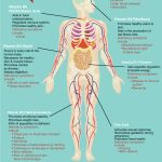 Digestive Health, General Well-being