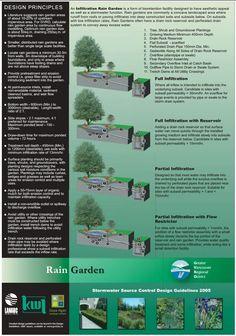 Rain Garden                                                                                                                                                     More