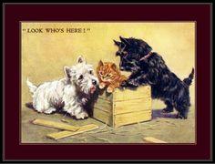 English Print Highland Scottish Terrier Dog Cat Art Pic