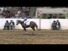 Really cute reining freestyle routine; 2010 All American Quarter Horse Congress Freestyle Reining winner.   Pickup Chic ridden by Laura Mae Schoeller
