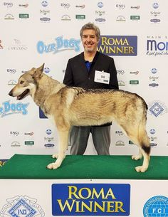 Fossombrone anche quest'anno vince il ROMA WINNER 2019 🏆 Dog Show, Dogs, Movies, Movie Posters, Films, Film Poster, Doggies, Popcorn Posters, Cinema