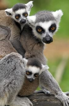 Baby animals spring up at zoos