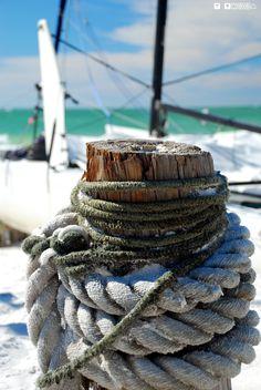 Anna Maria Island Beach Life! Find coastal beauty everywhere you look!