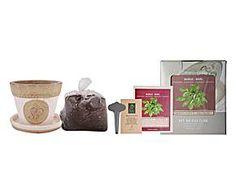Kit pour cultiver le basilic - 6 Pièces