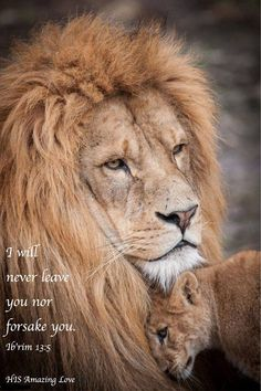 Hebrews 13:5 http://www.lshf.org/